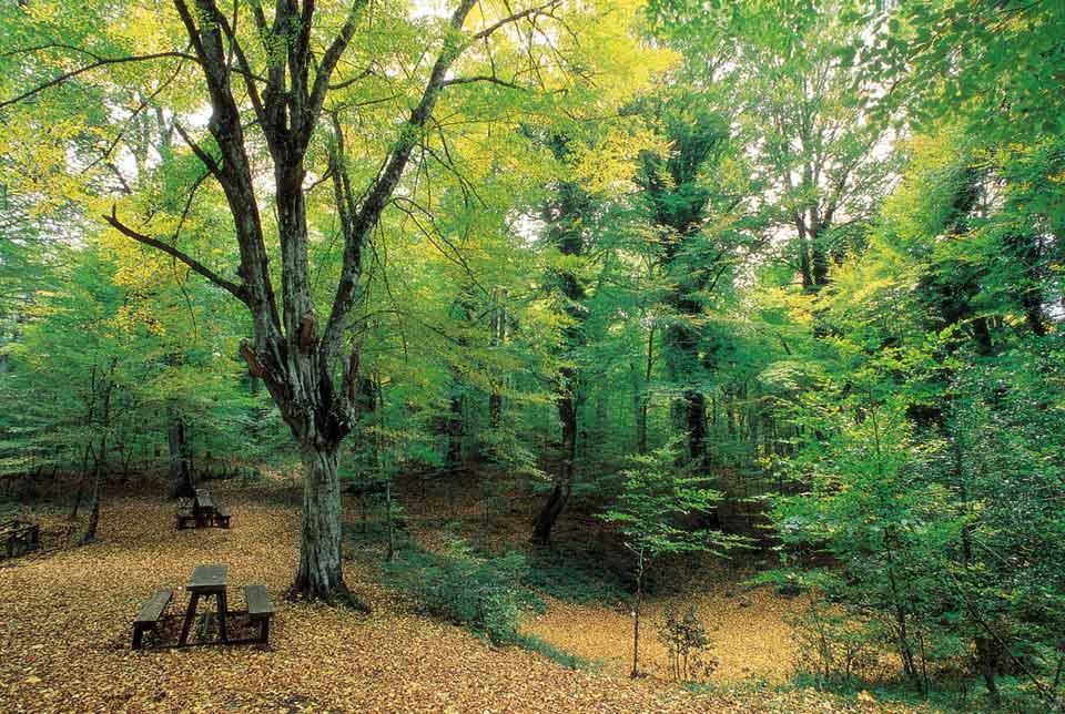 39 la foresta umbra patrimonio mondiale dell unesco for Cabine della foresta lacustre